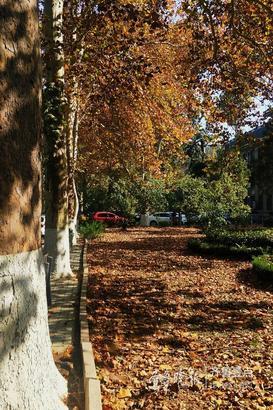虽然立冬刚过,但是山东师范大学校园内却一片落叶美景,好像童话世界一般,美不胜收,漫步在大学校园随便抓拍几张都文艺范儿十足。齐鲁晚报·齐鲁壹点记者 左庆 摄