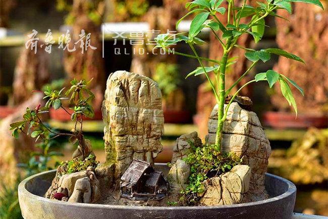 枣庄这些村民卖石头一年能挣二三百万