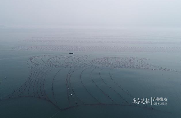 海带采收后均在海边鹅卵石滩或石头滩上晾晒,无沙子泥土杂草等夹带物,海带干品洁净美观,深受国内外客户的好评。这里的海域还适宜于鱼、贝类等海珍品的繁衍生息,水产品资源丰富,大钦海带、海参、鲍鱼、海胆、干海米、深水活鱼等在国内外享有良好的声誉。