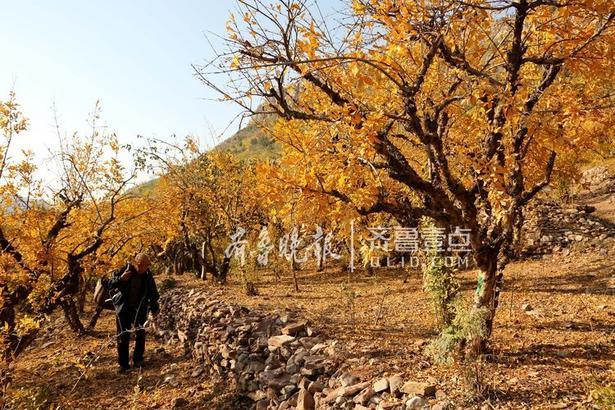 枣庄市峄城石榴园美景如画。