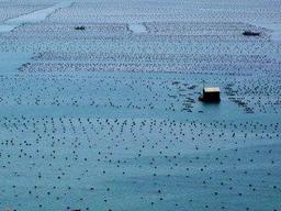 到2025年,我国将创建178个国家级海洋牧场示范区