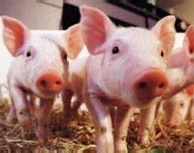 全国各地出招稳定生猪生产 分析师:重防疫 观行情