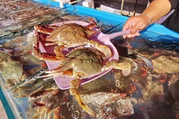 节前东港探海鲜:价格略涨还是便宜,商家说几个节日赚钱平时微利