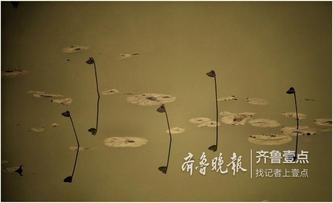 戚勇 11月8日摄于济南