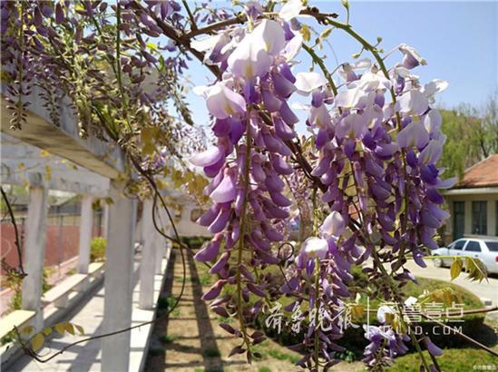 春光易逝,有心处处皆美景,欢迎壹粉们来情报站晒出您镜头下缤纷盎然的春天!