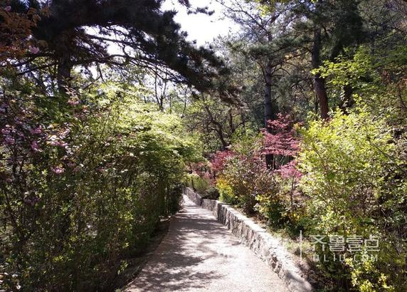 16日,与游客阔别三个月之久的崂山九水游览区恢复开放,迎来了众多游客。当天阳光明媚,搭配九水的如画美景、漫山绿色,前去的游客表示心情十分愉悦。