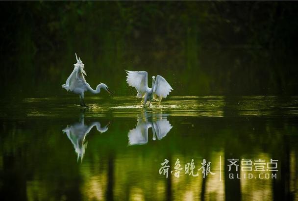 大抵一方,有水则灵。微山湖烟波浩渺,菡萏映日;岸边绿柳垂掩,芦苇撑绿;舟楫白帆,点缀其间;更兼鸭栖沙渚,鹭鸟飞天,平添了几丝钟灵毓秀之气。盈盈荷香和起落的鸟影,将湖的静与动,色与形,自然流淌在一张静静铺开的湿漉漉的巨幅宣纸上,宣泄着大自然的诗情画意。