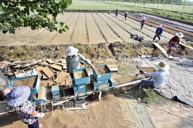 家庭农场、种粮合作社的育秧基地里机械轰鸣,一派繁忙的育秧景象。