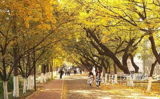 9日,在山东师大老校区,大批树木变成了金色、红色。学生们也十分陶醉这金色的世界。这些枫树、银杏和法桐,让整个校园变成了彩色世界。(齐鲁晚报·齐鲁壹点记者 周青先)