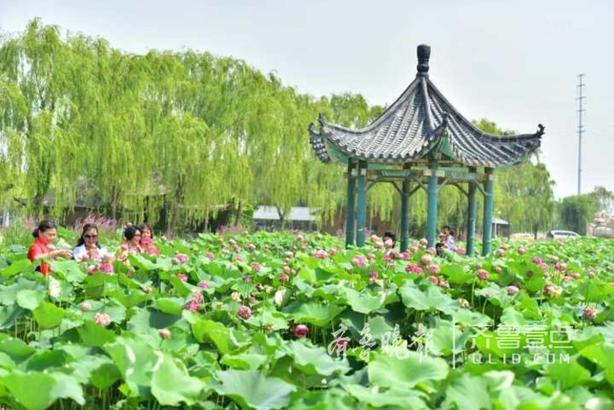 """6月30日,以""""赏荷花美景,与文明同行""""为主题的中国江北水城第十二届荷花节在南湖湿地公园开幕。 公园内,一望无垠的荷塘中,铺陈着诗一般的绿意,微风拂过,荷花幽现,粉红的、淡黄的、粉白的各种荷花争奇斗艳,有的亭亭玉立,有的小荷初露,一缕缕淡淡荷香扑面,令人心旷神怡。沿着荷田栈道漫步,或近距离观赏荷花,让游客感到既身在花中,又疑在画中,呈现出""""接天莲叶无穷碧,映日荷花别样红""""的美丽景象。 据了解,南湖湿地公园占地560亩,是一个荷花主题公园,目前有荷花品种183个,本次荷花节将持续至9月10日,活动期间,在突出主题活动的同时,将开展文艺演出、""""清风荷韵旗袍秀""""、""""文明城市创建宣传""""、""""青少年夏令营""""等活动,给市民带来丰富多彩的夏日生活。 齐鲁晚报.齐鲁壹点记者杨淑君"""