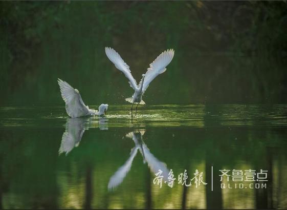 鸟是微山湖的精灵。微山湖芦荡茂密,水浅地湿,饵料丰富,是鸟儿生活、栖息的乐园。湖中水禽、鸟类达八十余种之多。除常年在湖上生活栖息的苇茑、翠鸟等外,每年秋末,从中俄边境一带南迁的野鸭等候鸟,返回微山湖上过冬。每到此时,微山湖就是一片鸟儿的天堂。