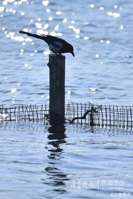 """13日晚上9时许,壹粉""""东方红YYD""""在齐鲁晚报官方新闻客户端齐鲁壹点情报站发来一组上午在大明湖的照片。图片中飞鸟在天空飞翔,枯荷下面野鸭在水中漫游,腊梅吐出花骨朵,整个风景非常惬意。"""