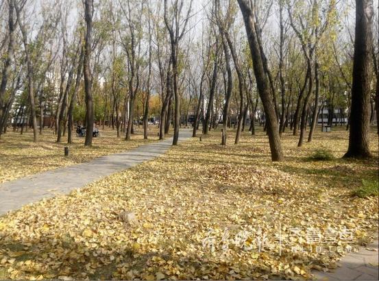 一年好景君须记,冉冉秋光留不住。11月13日烟台大学校园里,秋意正浓;天空成为留白,寥廓高远;苍翠的青松依旧绿得耀眼;斑驳的秋叶随风摇曳,红得耀眼,黄得灿烂。深秋,银杏树满树金黄,一阵风吹过,那金色的光芒在树叶间跳跃,仿佛小精灵在欢快地玩耍。