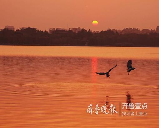 清晨的济南大明湖是最美的,晨雾像轻纱笼罩在湖面上,看上去那么的温柔,湖面上碧波荡漾,一层盖一层,湖水像碧绿的绸缎,又像被周围的花草染过似的。 钟福生 10月11日摄于济南