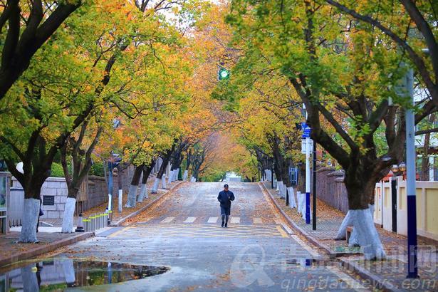 小雨淅沥,瞬间将气温拉低下来,清晨湿漉漉的只有5℃,清冷的初冬悄悄来了。深秋还没过够,彩叶正是佳期。八大关,老城区,中山公园,唯美景致随处可见。我们都爱这彩色世界,11月的青岛等你来。(青岛新闻网)