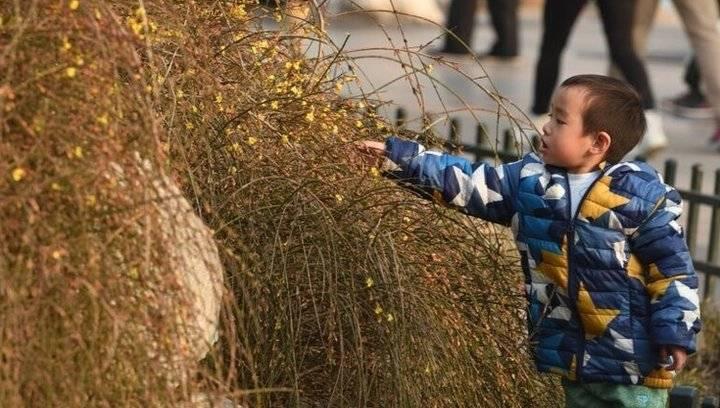果然视频|济南大明湖畔迎春花开,装点你的春