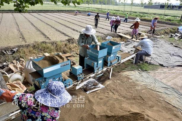 """初夏时节,被誉为""""鲁南粮仓""""的山东省郯城县大力推广""""水稻自动化育秧""""技术。"""