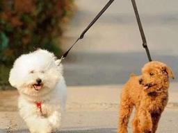 人民日报评整治不文明养犬:坚守刚性规则非常必要