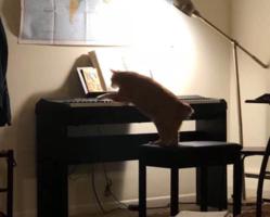 钢琴老师家养的橘猫,卖艺换小鱼干!太励志