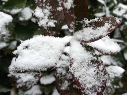 寒潮速冻山东!多地共发布65个预警信号,局地中到大雪