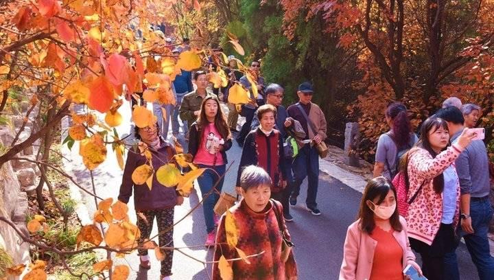 果然视频|济南社区老人游览红叶谷,一路欢笑一路歌
