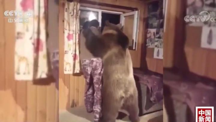 战斗民族的日常!俄罗斯棕熊与主人勾肩搭背