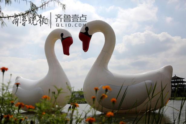 """国庆、中秋小长假期间,京杭大运河畔的山东枣庄台儿庄双龙湖观鸟园""""游进""""两只身高各有20米的巨型""""天鹅""""气模,为节日增添不少乐趣。"""