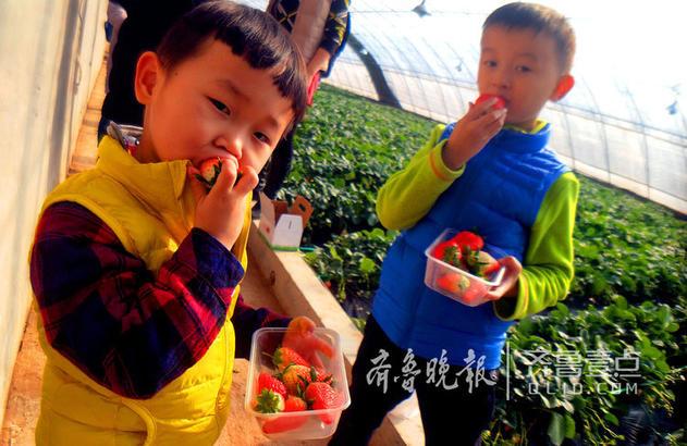 又到草莓季,红彤彤的外表,充满甜蜜诱惑。14日,济南陆军学院的几个家庭带着孩子,相约来到济南玉清湖畔的溪地农园采摘草莓,边吃边摘让孩子们乐不思蜀。齐鲁晚报·齐鲁壹点记者左庆摄