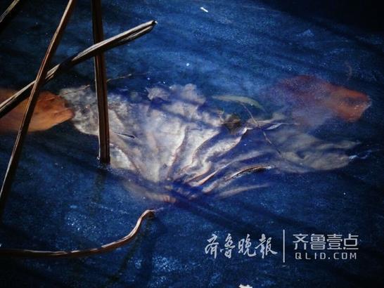 (齐鲁晚报•齐鲁壹点记者 左庆 摄)