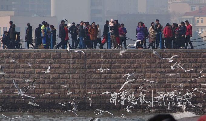 3月13日青岛迎来今春最温暖的春日。大批游客和海鸥互相逗乐,场面十分热闹。暖春回归,整个大地充满生机。(齐鲁晚报·齐鲁壹点 记者 周青先 摄)编辑:小明