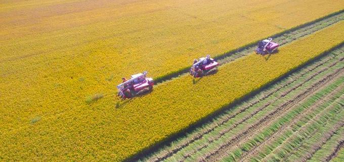 据了解,当地农民将土地作为股份加入合作社,由合作社统一管理经营,农民除每月可获得固定的酬劳外,年底根据收益还可分得红利。
